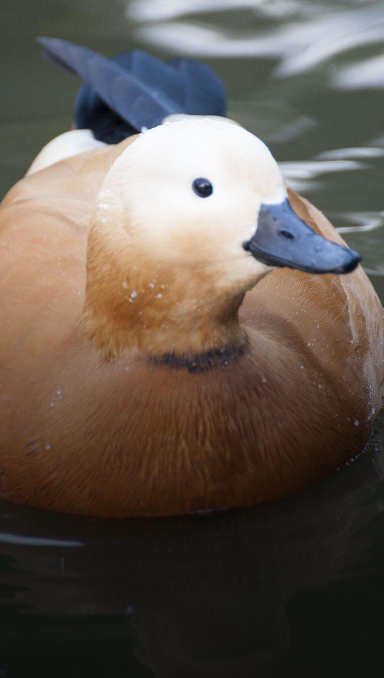 Aves acuáticas-2