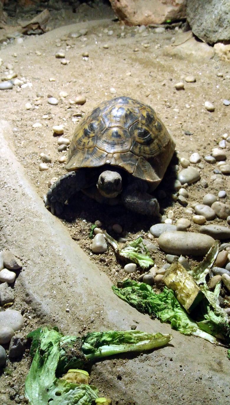 Tortuga mora 780x1376